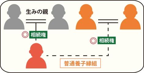 普通養子縁組をした普通養子は法律上、養父母と生みの親双方からの相続権を持つの図