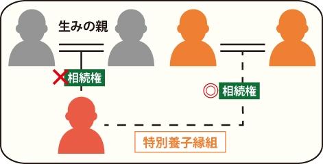 特別養子縁組をした特別養子は生みの親の相続権はないの図